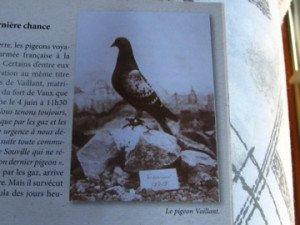 """le pigeon """"  VAILLANT """""""